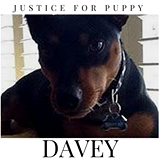 justice for puppy daveypng